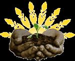 plant_3_288